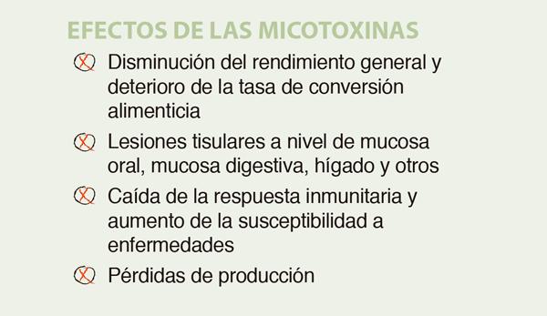 MYCOSECURE poultry efectos micotoxinas