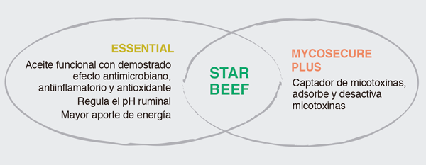 starBeef gráfico