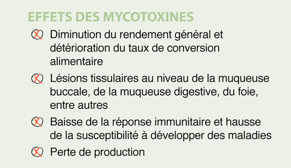 effets mycotoxines mycosecure poultry